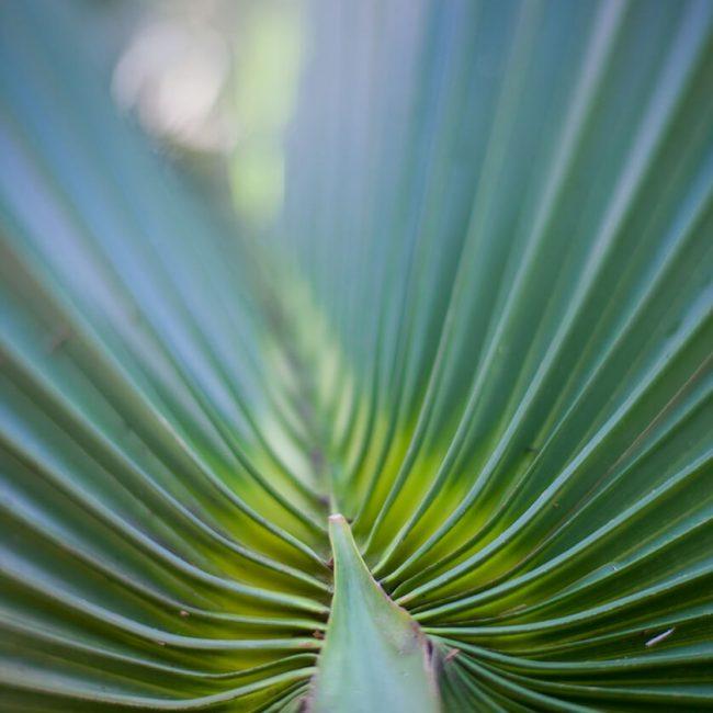 palm leu gardens