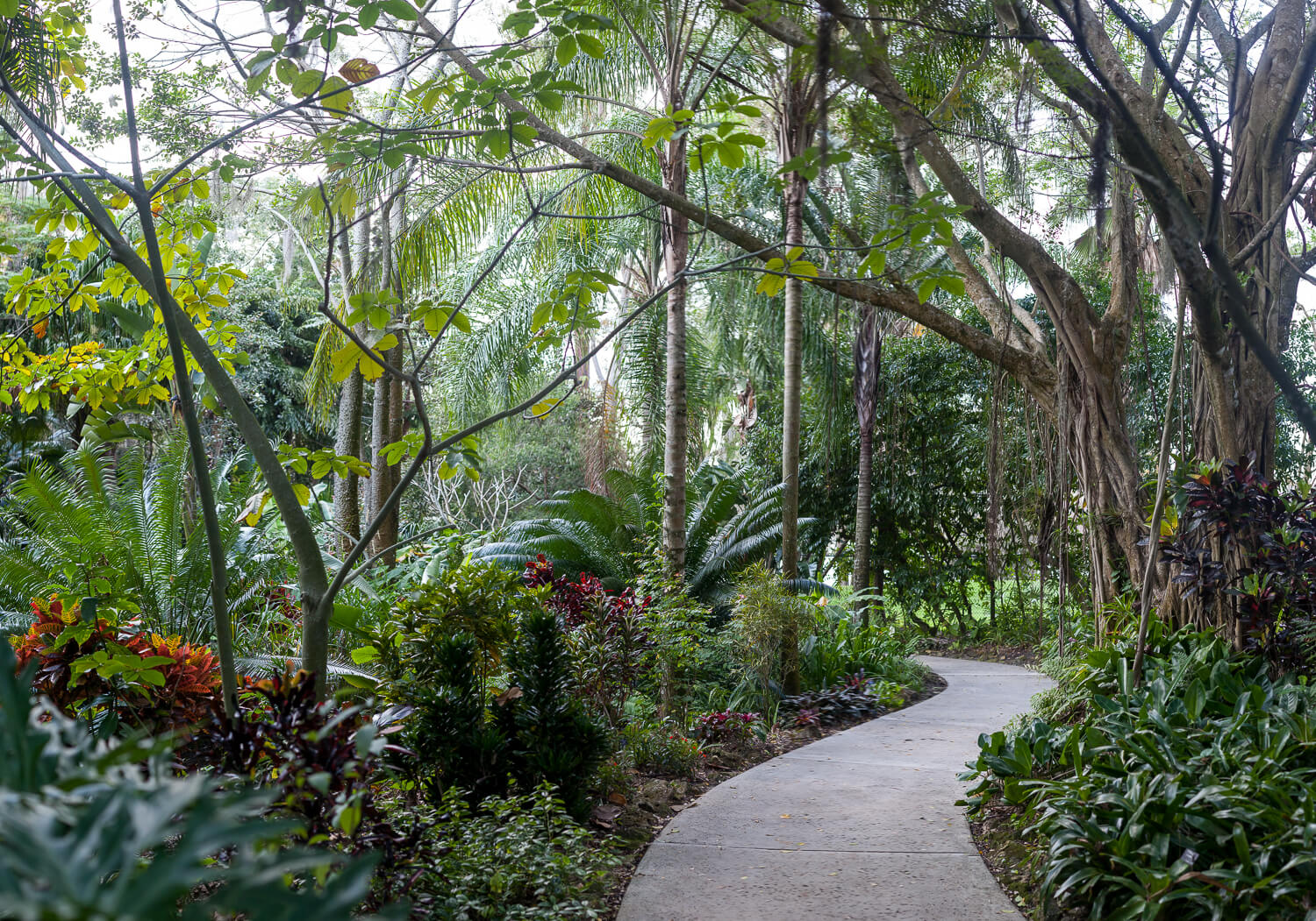 Leu Gardens Tropical Stream Garden