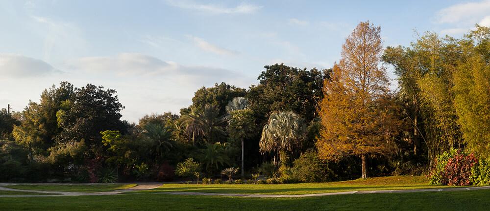 palm garden leu gardens