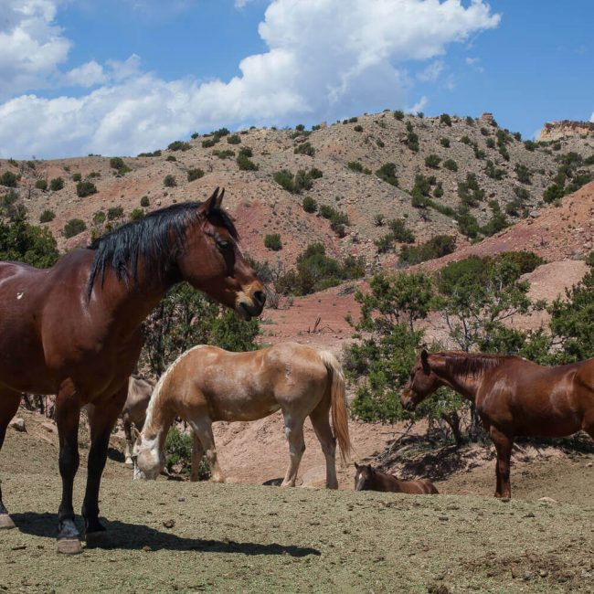 Ghost Ranch Horses