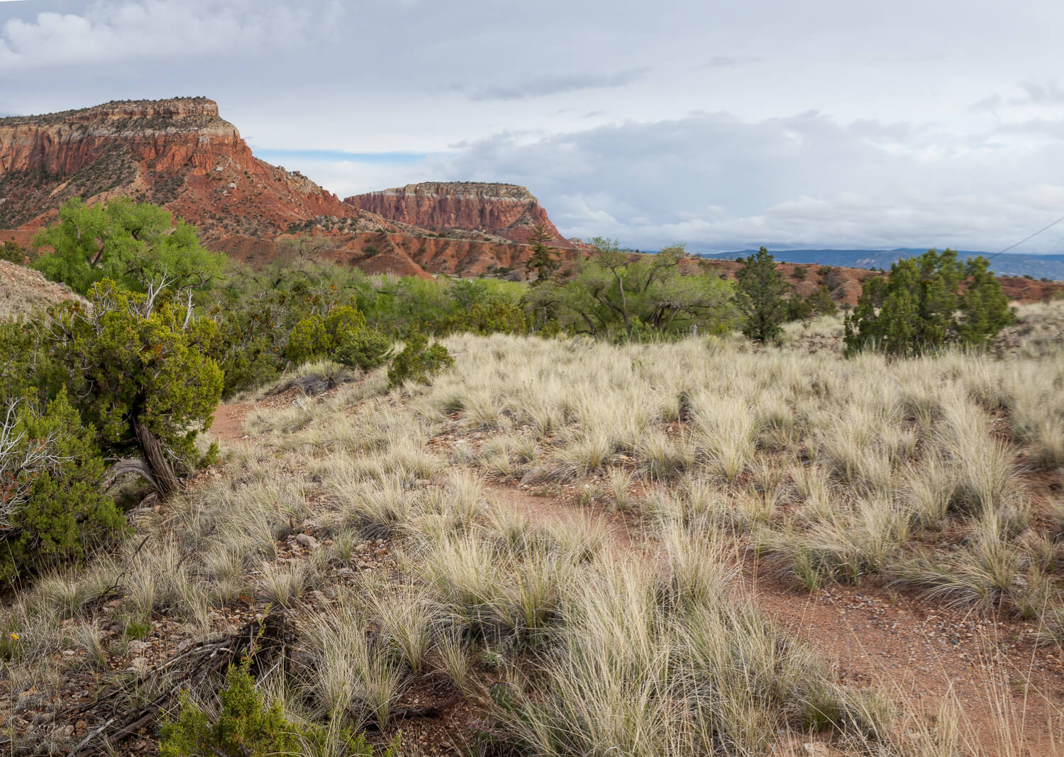 piñon-juniper woodland habitat grass Ghost Ranch