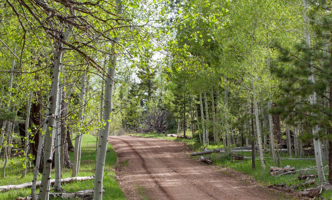 Aspen tree road