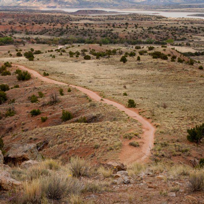 Piñon-juniper woodlands plants ghost ranch