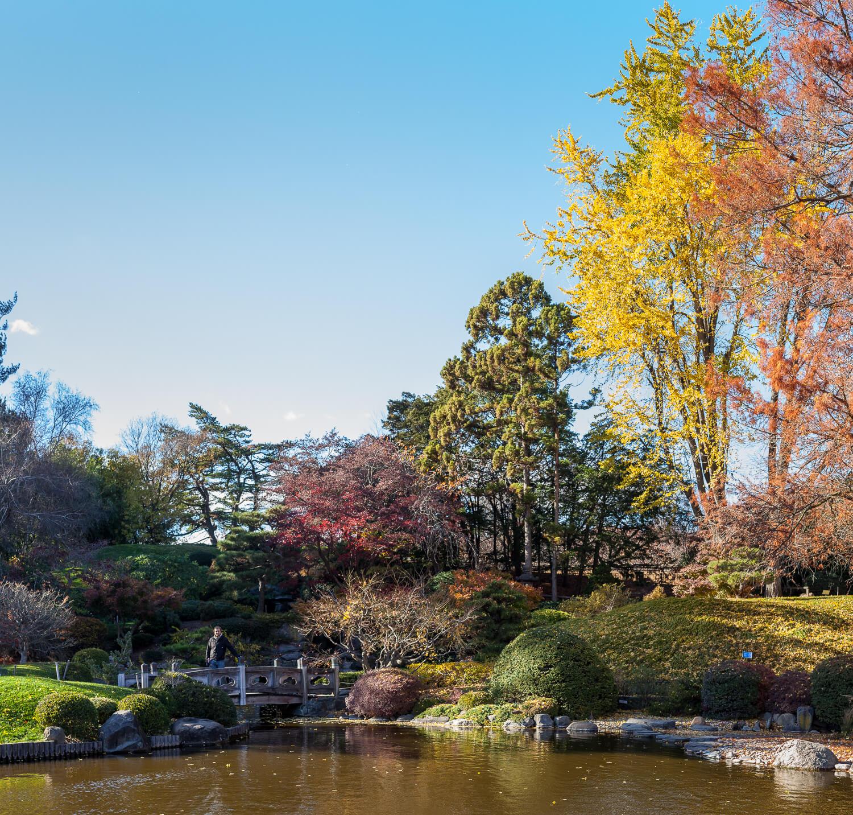 Japanese hill-and-pond garden brooklyn botanic garden ginkgo