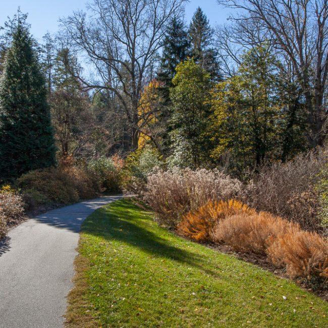 Biltmore Gardens Azalea Garden threadleaf bluestar (Amsonia hubrichtii)