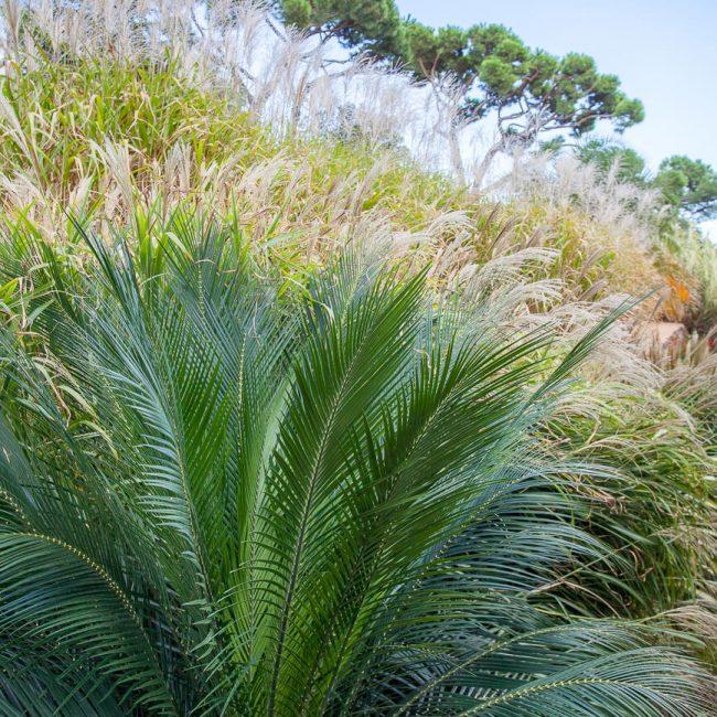 Jardins de cap roig palm