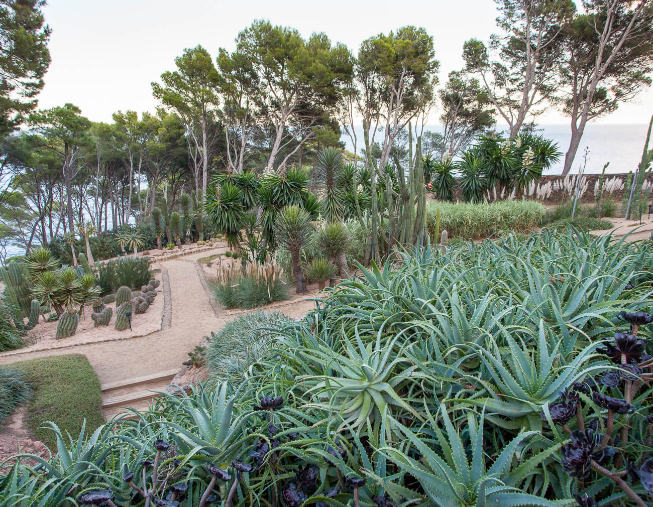 jardins de cap roig cactus succulent garden