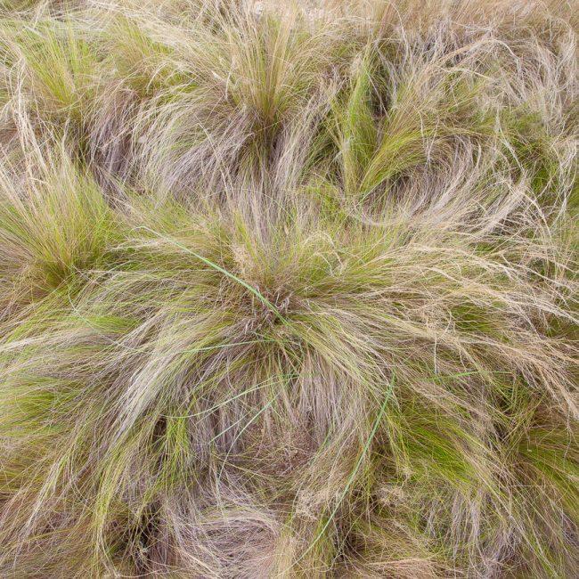 Jardins de cap roig grass