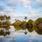 Fairchild Tropical Botnanic Garden Palm Lake Reflection