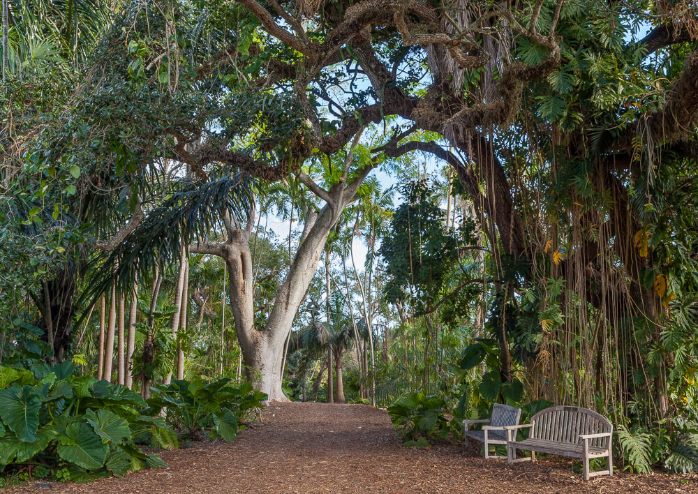 fairchild tropical botanic garden trees mulch path