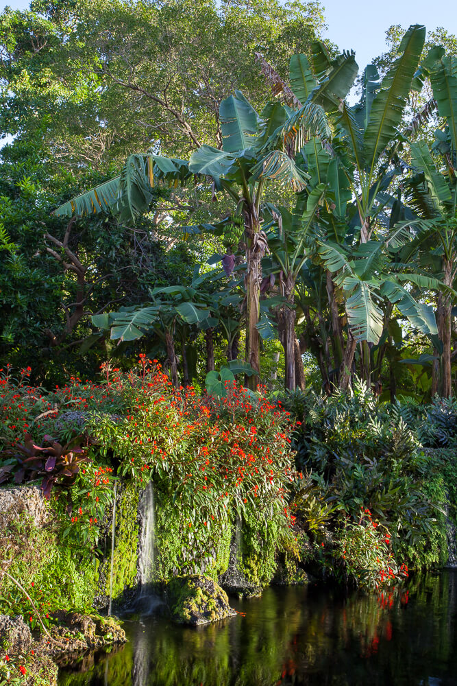 Exotic Escape to Fairchild Tropical Botanic Garden   Cultivated and Wild
