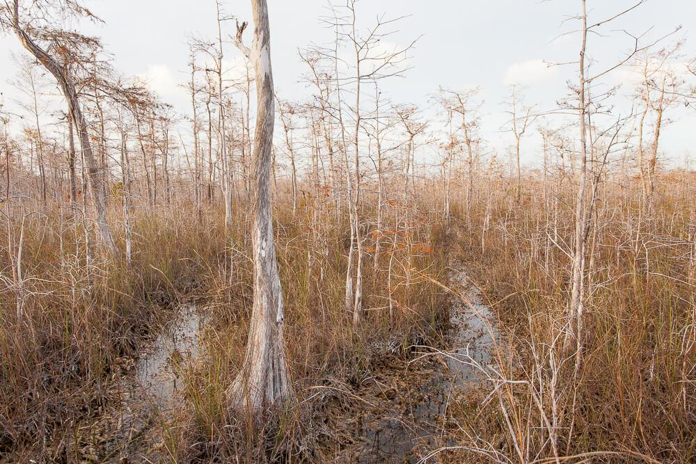 freshwater marl prairie ecosystem big cypress