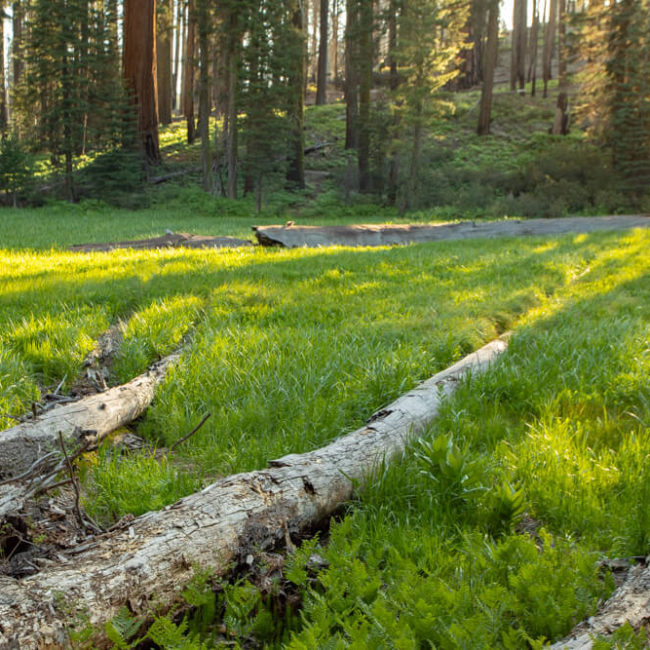 Sequoia National Park Log Meadow