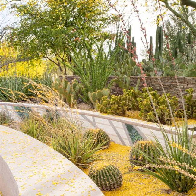 palo verde desert botanical garden
