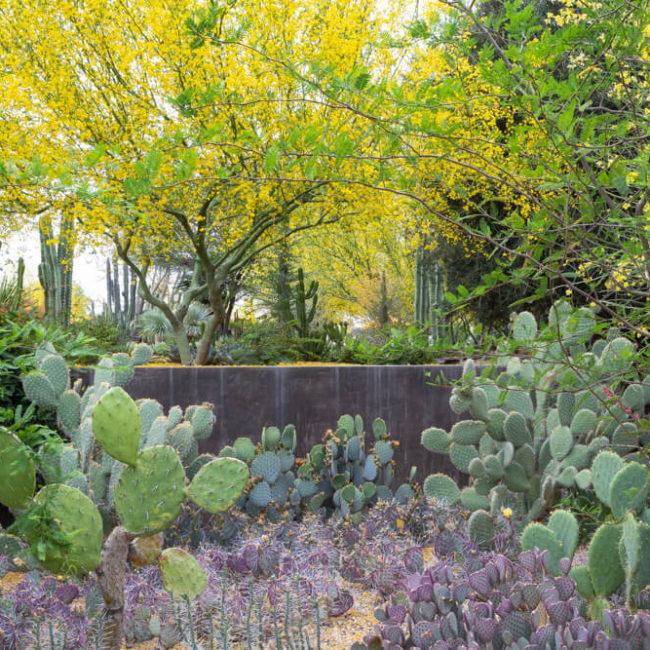 Cacti desert botanical garden phoenix arizona