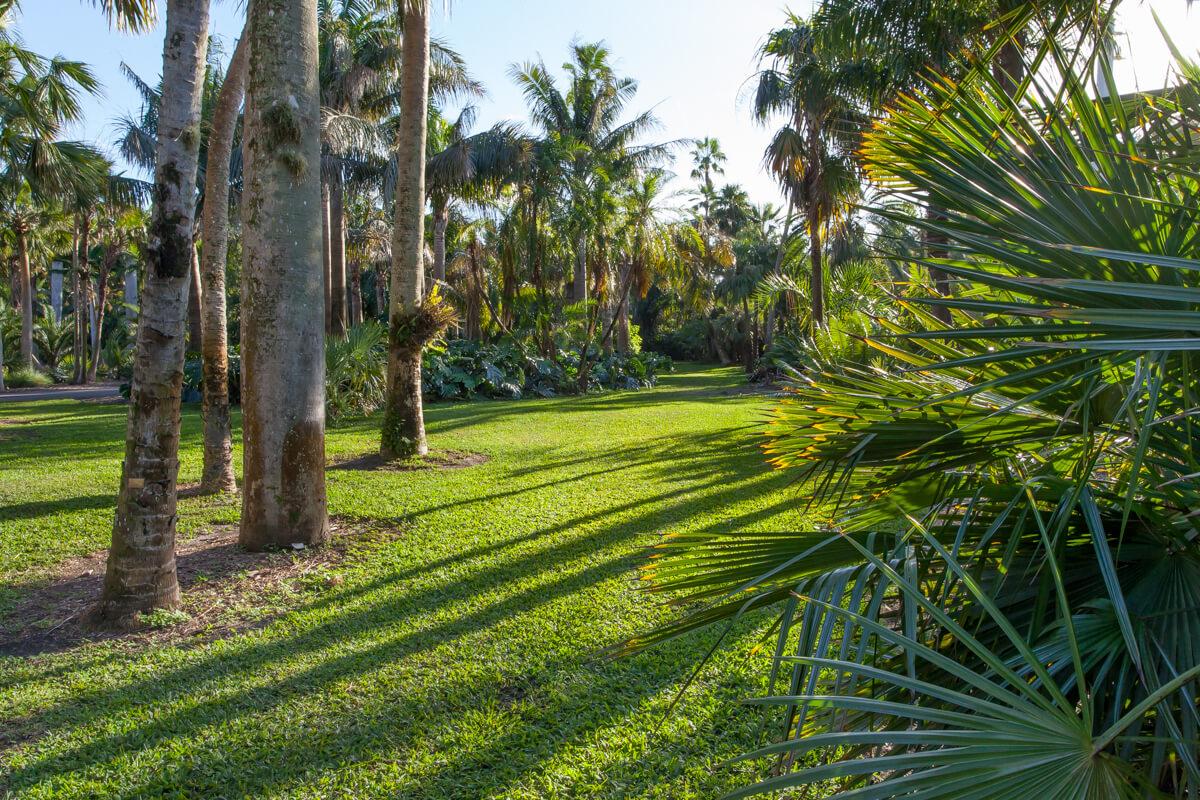 Montgomery Palmetum Fairchild Tropical Botanic Garden