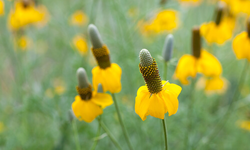 wildflower and native plant photography gallery